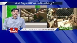 Goat Farming | Ideal Farmer Purna Chandra Reddy Tips | Nela Talli |31.08.2016 | HMTV