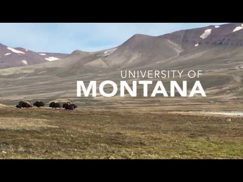 UM International Research Experience: Greenland and Denmark