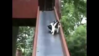 Котэ-ПРИКОЛЫ ))) Коты, кошки и котята ! (ЧАСТЬ 1) 2013 апрель Funny Cats!