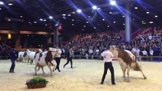 Salon de l'Agriculture Paris 2017 : Concours Général de la race Monbéliarde