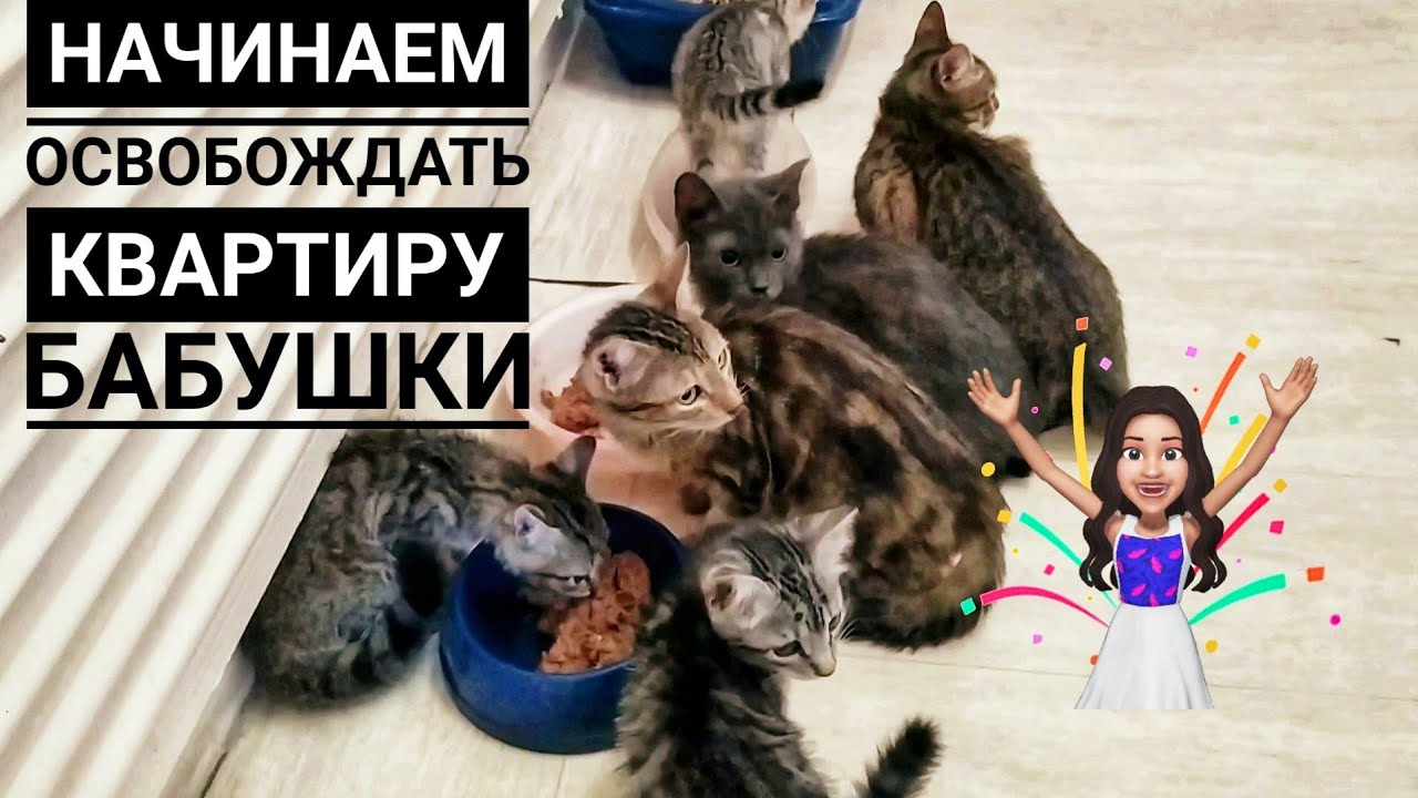 2 ЧАСТЬ: Я Забрала у бабушки 8 кошек осталось 24 шт🙊 Одного уже пристроила😍