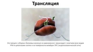 3. РНК и синтез белка (9 класс) биология, подготовка к ЕГЭ и ОГЭ