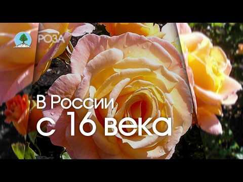"РОЗА. Питомник ""Сады Урала"""