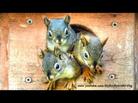 Funniest and Cutest Baby Squirrels !