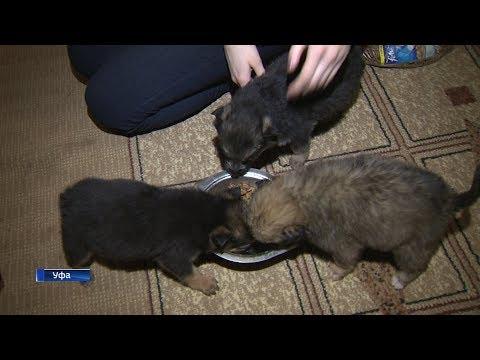 В Уфе школьница открыла собственный приют для бездомных животных
