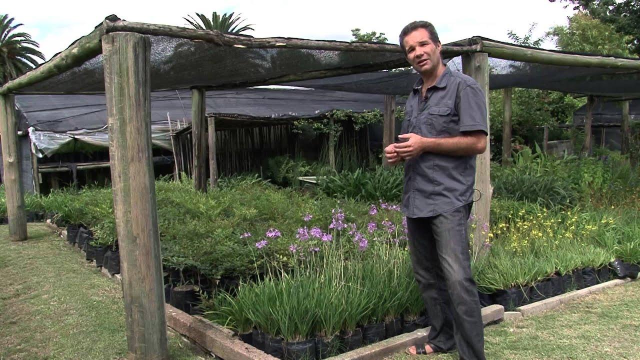 Plantas duraderas con floraci n interesante herbaceas for Plantas de jardin resistentes