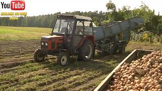 Kopanie ziemniaków 2019 ☆ URSUS c-360 3p II Zetor 5211 & ANNA
