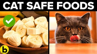 11 Human Foods Your Cat Can Eat