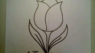 How To Draw A Tulip Flower Easy como dibujar un flor de tulipan Fun2draw