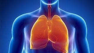 """Урок №18 """"Органы дыхания, их строение и функции"""""""