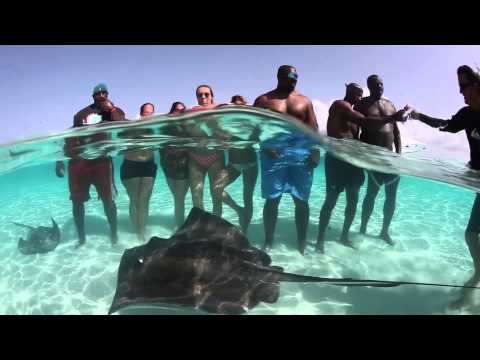 1DD Destinations: Kavita Channe takes us to explore the Cayman Islands with the Miami Dolphins.