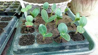 Vegetable Garden Update 7 October to 14 October Excellent Result