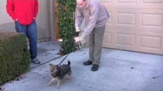 Correcting Dog Aggression