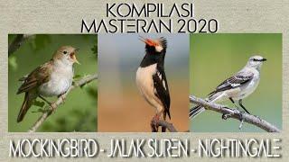 Gambar cover MASTERAN MOCKINGBIRD-JALAK SUREN-NIGHTINGALE | MASTERAN KICAUAN 2020