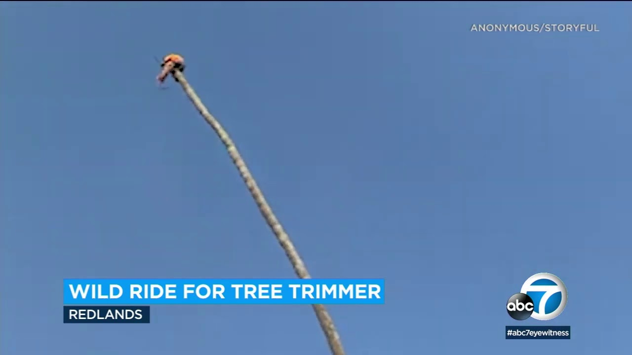 Redlands tree trimmer goes viral after wild palm tree ride | ABC7