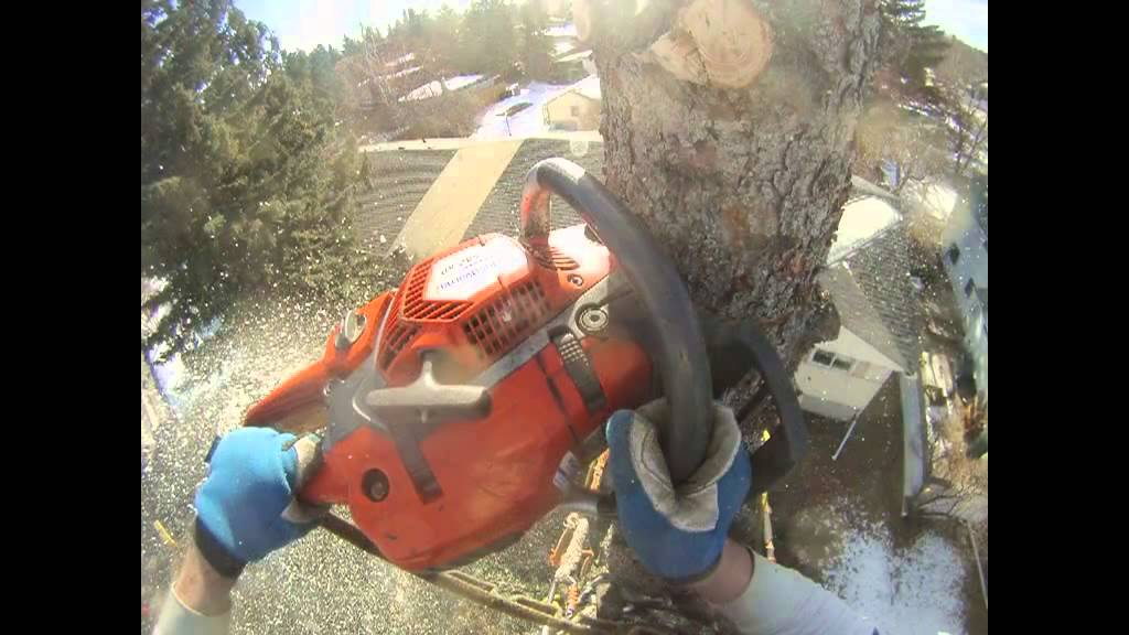 Time lapse Spruce removal