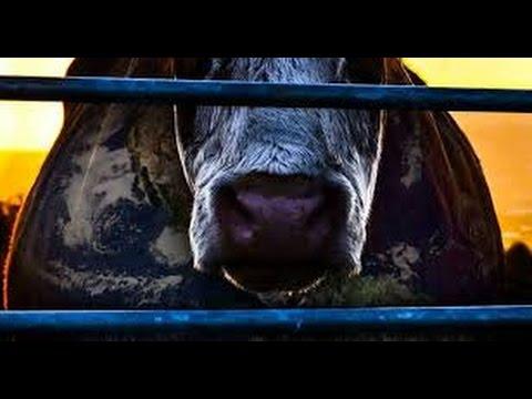 POPULACE - Krátké video z dokumentu Cowspiracy