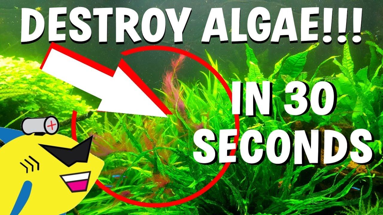 How to get rid of algae