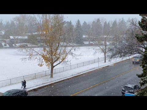 Snow Fall In Calgary 2020 Alberta Canada || Days In Canada || A Snowy Evening