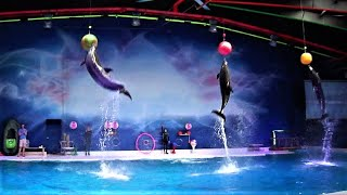 Best of the Dubai Dolphin Show HD