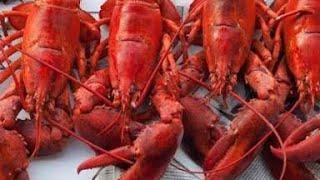 ( CULINARY ) SEA FOOD ALL YOU CAN EAT HOTEL IMPIANA KUALA LUMPUR KL MALAYSIA MBLADOG RAKUS OYSTER