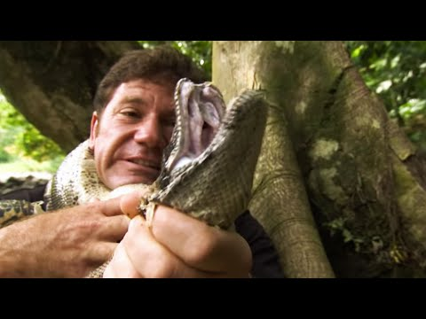 Strangled by a Boa Constrictor | Deadly 60 | Series 2 | BBC Earth