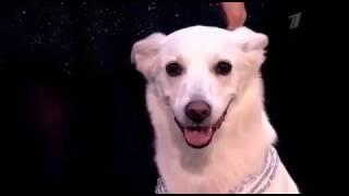 Собачий балет