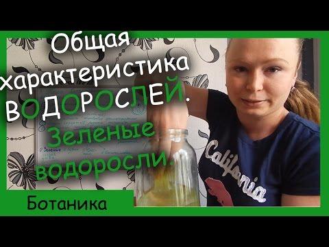 Урок биологии №43. Характеристика и классификация водорослей. Зеленые водоросли.