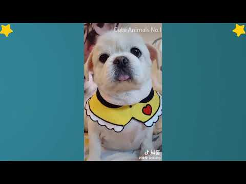 Cute Dog videos  - Cute and Funny Dog Moments Compilation #4