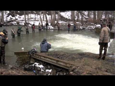 The 50th Annual Naples Creek Rainbow Trout Derby