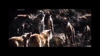 The Lion King 2019 Movie Clip Mufasa Saves Simba And Nala Scene