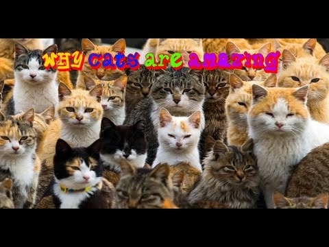 Why Cats are AMAZING - Twilight the cat