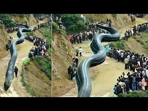 Download पूरा का पूरा देश निगल जाता अगर ये ज़िंदा होता the biggest titanoboa snake ever lives,longest snake