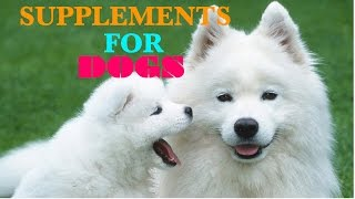 All Natural Dog Vitamins : Supplements for Dogs: Glucosamine for Dogs VitaLife Show Episode 147