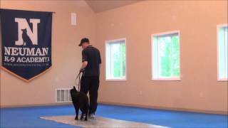 Lincoln (german Shepherd) Trained Dog Video - After Boot Camp