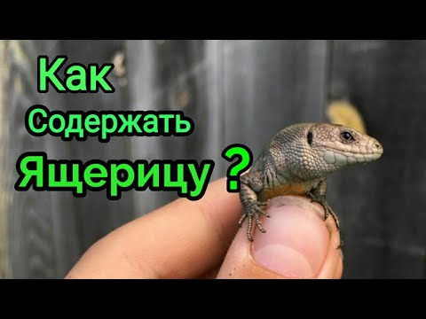 Вопрос: Как заботиться о домашней ящерице?