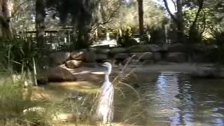 Кенгуру, животные Австралии