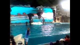 Atraksi Lumba-Lumba (Ocean Dream Samudra - Ancol)