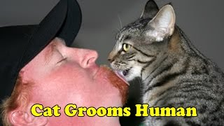Cat Grooms Human Owner | Licks Face & Beard