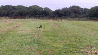 Dog Boarding And Dog Obedience Training Truro Cornwall | Puppy Training Cornwall