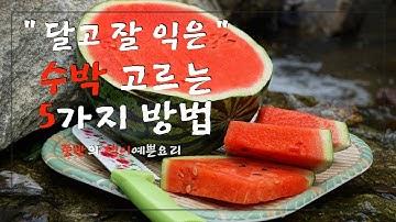 이제는 두드리지 마세요.달고 잘 익은 수박 고르는 법,실패 없이 잘 익은 수박 고르는 5가지 방법,How to Choose a Delicious Watermelon