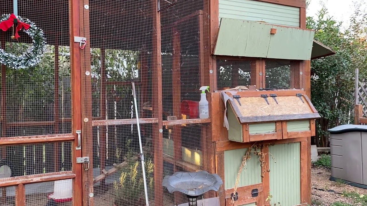 How Much Does It Cost to Have Backyard Chickens? - YouTube