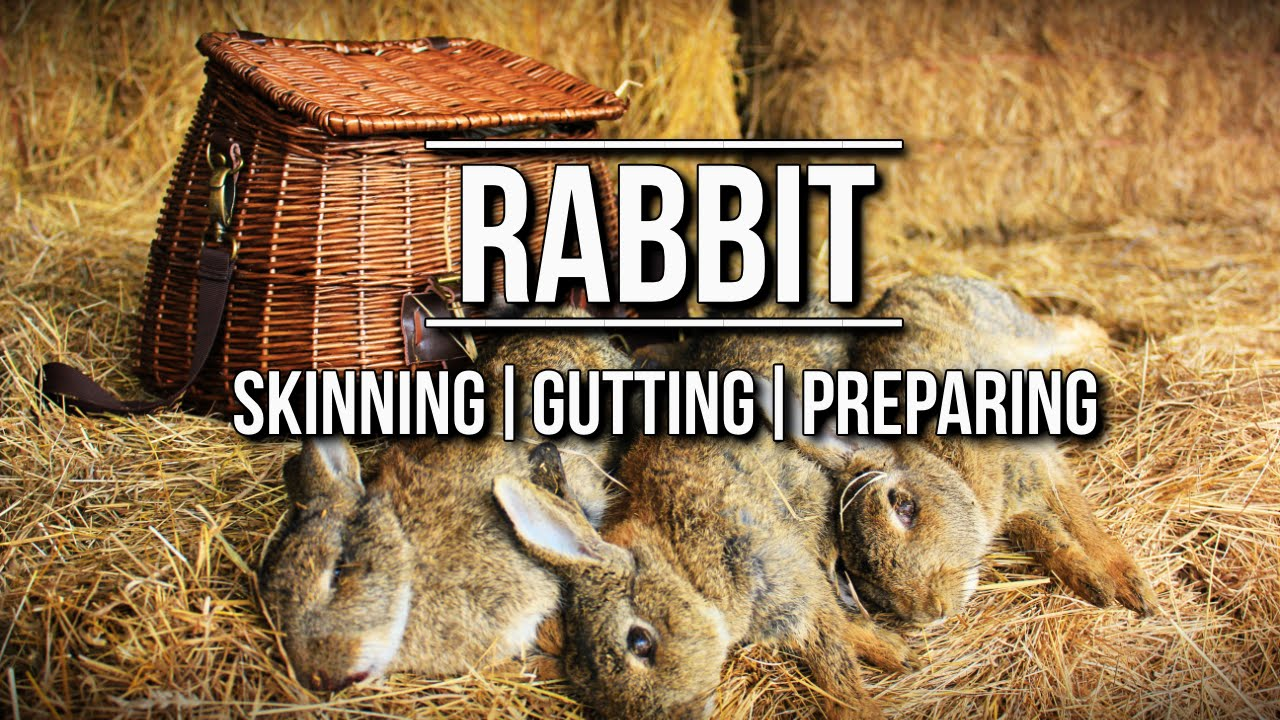 How to skin a Rabbit   TA Outdoors