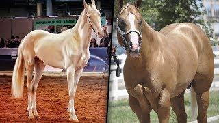 10 Raças De Cavalos Que São Únicas No Mundo thumbnail