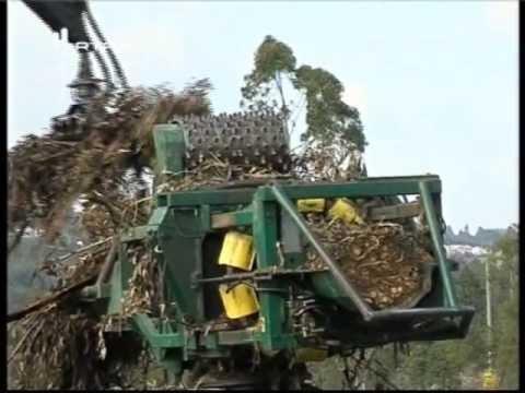 Aproveitamento Energético Da Biomassa. (Portugal Da Terra Ao Mar)