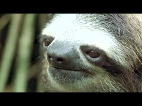 Wow Can You Not? (Annoyed Sloth) - YouTube