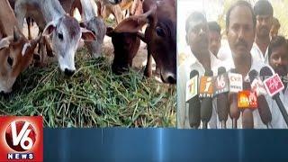 Go Samrakshana Samithi Demands To Provide Basic Facilities In Yadadri Goshala   V6 News