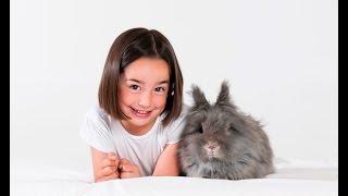 Кролики - расчёсывание и обрезание когтей(В этом ролике наш ветеринар Антонио Родригес покажет Вам, как правильно расчёсывать кролика и обрезать..., 2015-07-30T13:02:52.000Z)
