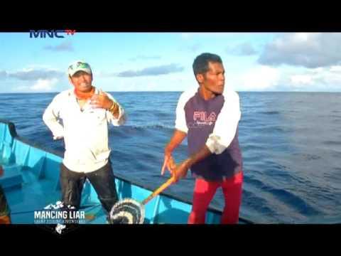 Hujan Ikan Cakalang di Maluku Utara - Mancing Liar (11/9)