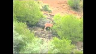 save urial in pakistan part 3.webm